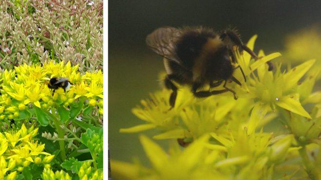 Nahrung und Nistmöglichkeiten für Bienen und Hummeln